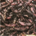 worms5